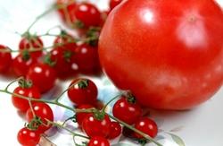 micro tomato.jpg